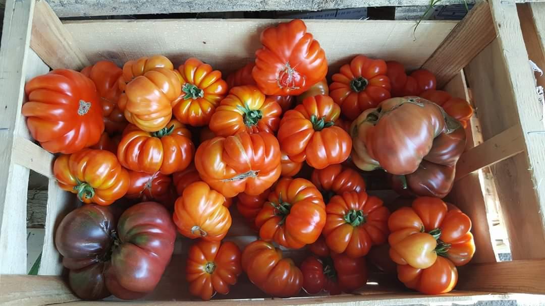 tomates ok